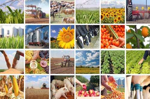 Аграрії Полтавщини оновлюють техніку завдяки кредитним програмам ПриватБанку
