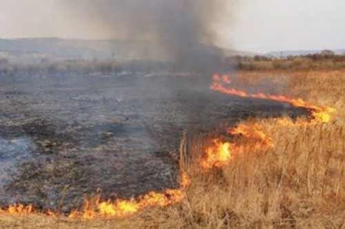 На Гребінківщині ліквідували пожежу на відкритій території