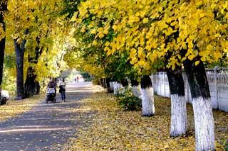 На наступному тижні до Гребінки прийде холодна осінь